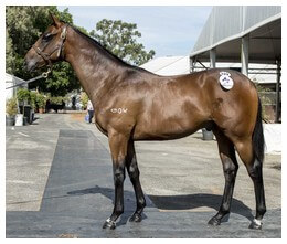 Colts by Blackfriars and Oratorio Share Honours in Perth