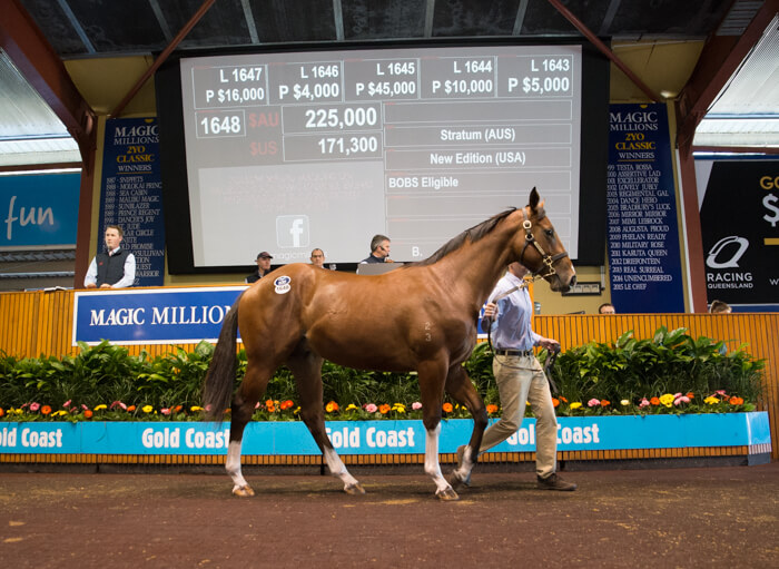 Stratum Colt Tops Day One of National Yearling Sale