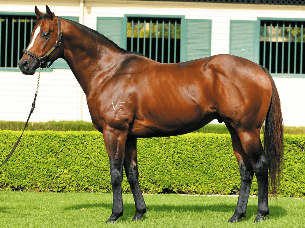 Slipper Placed Sire Heads Overseas