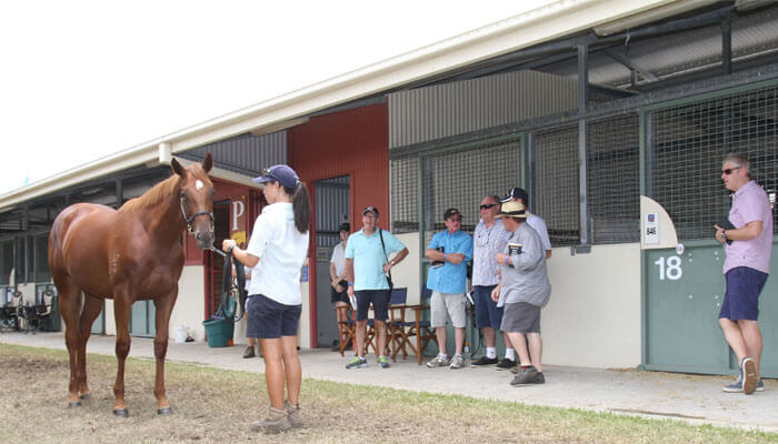 2016 Gold Coast Yearling Inspections
