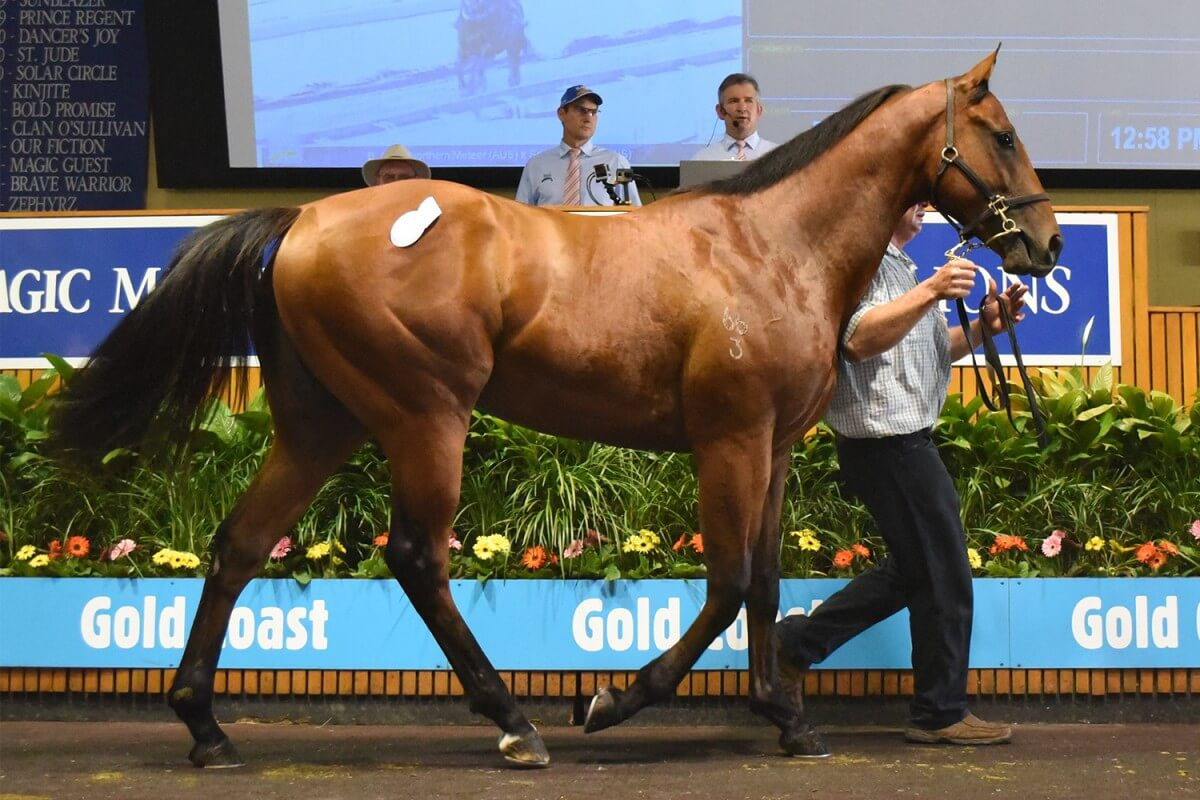 Northern Meteor Colt Stars as Average Soars 71% on Gold Coast