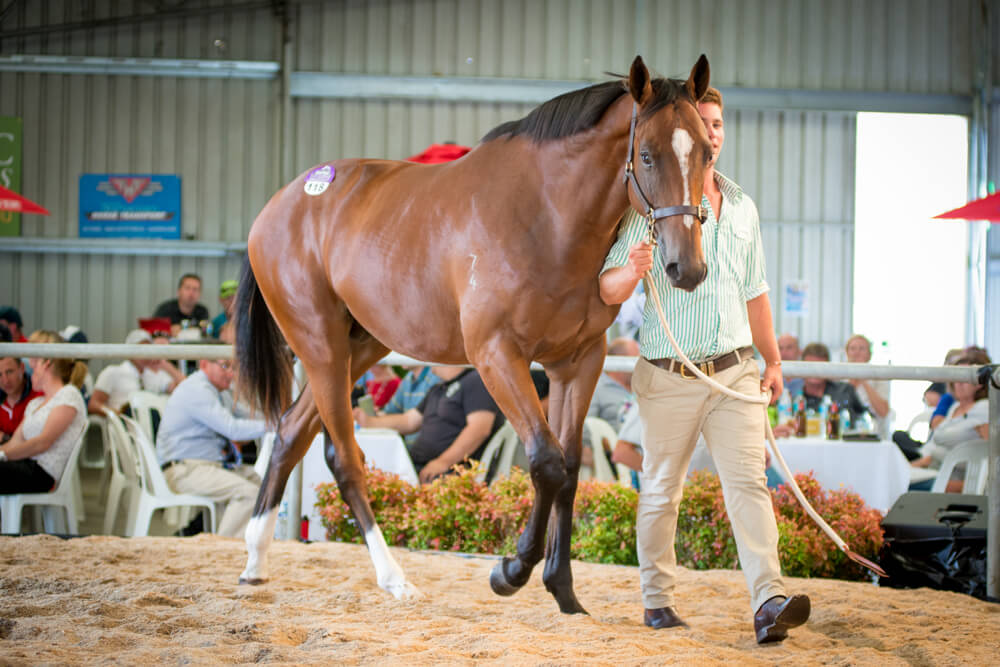 Records Smashed at Best Ever Tasmanian Yearling Sale