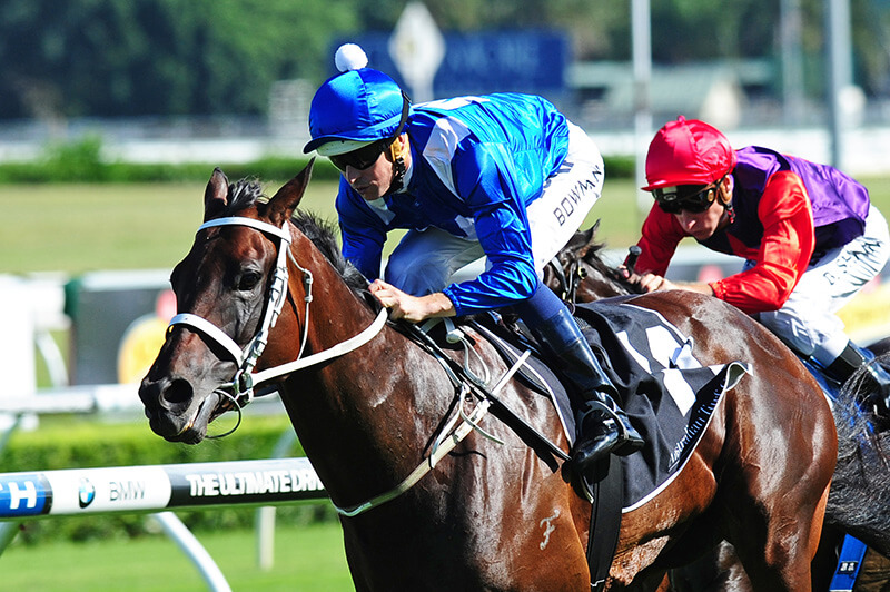 Winx wins the Chipping Norton Stakes