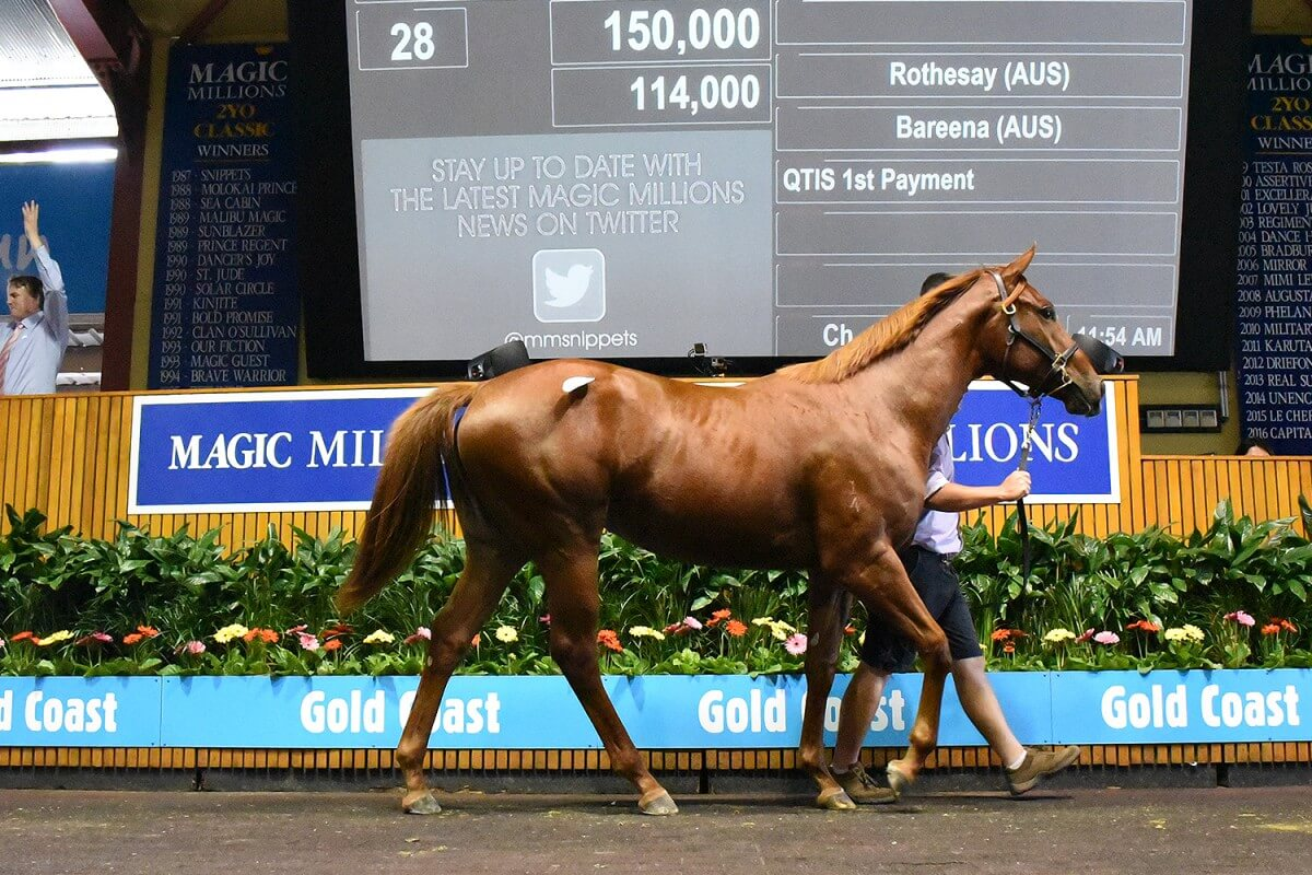Solid Start to Gold Coast March Yearling Sale