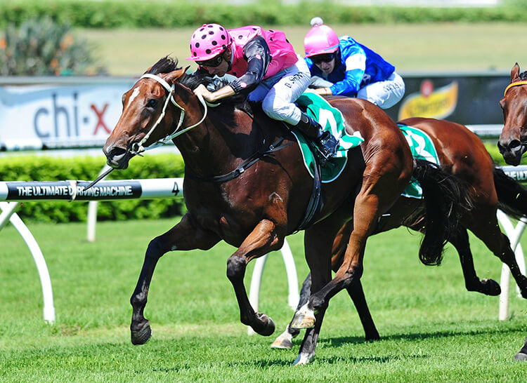 Six Stakes Wins on Magic Day
