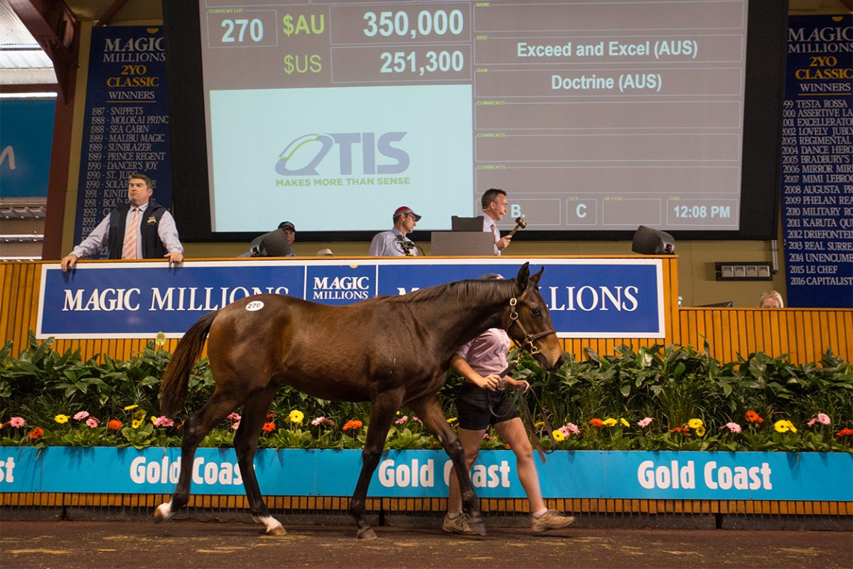 Records Tumble at National Weanling Sale