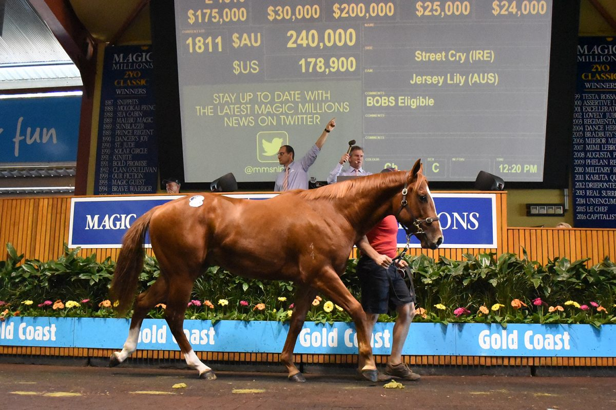Street Cry Colt Stars as Prices Soar on Gold Coast