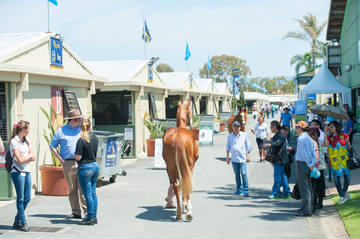 Entries Open for Gold Coast 2YOs in Training Sale