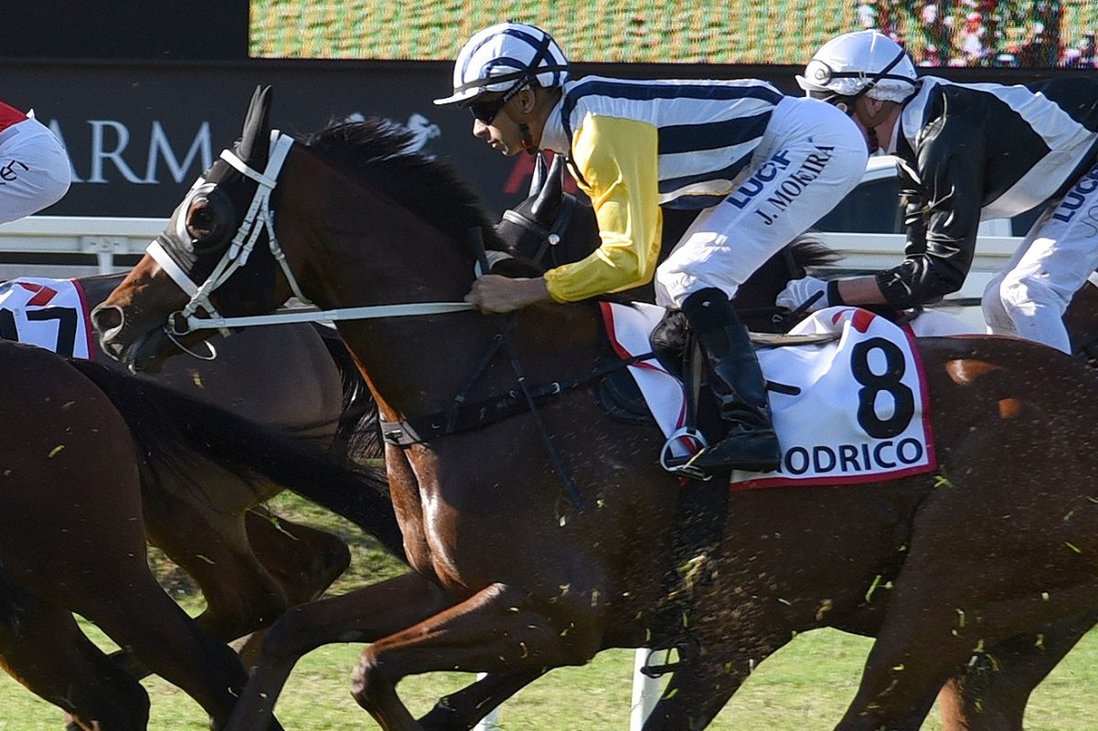 Derby Runner-Up Sold to Hong Kong