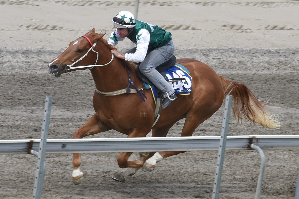 Youngsters Breeze Well at Gold Coast