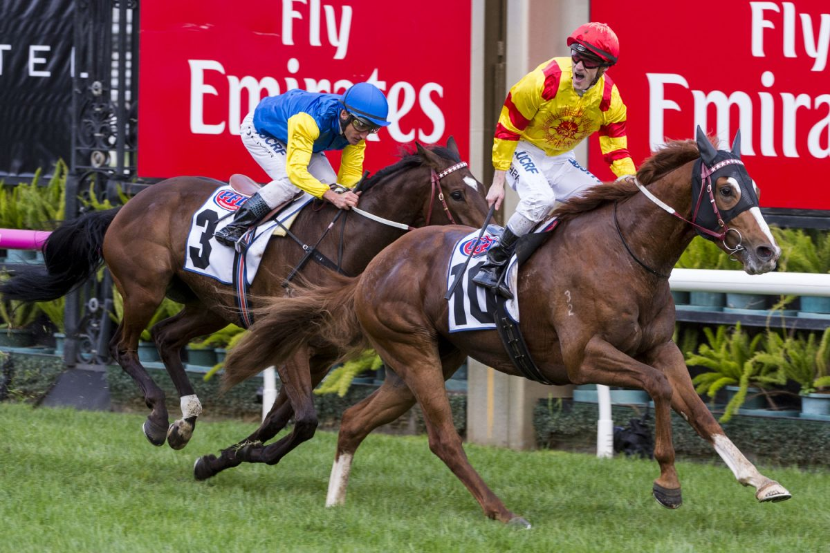 Palentino Storms Home in Makybe Diva Stakes