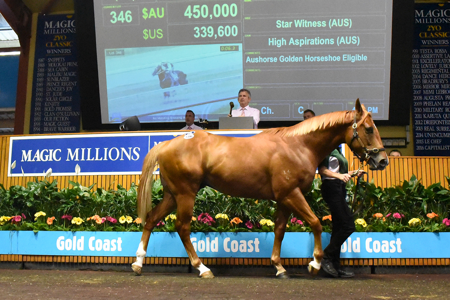 Guy Swoops on Sale Topping Star Colt