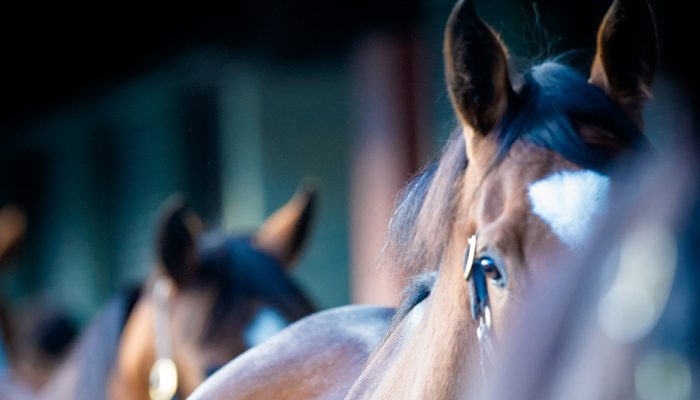 Worldwide Appeal at National Broodmare Sale