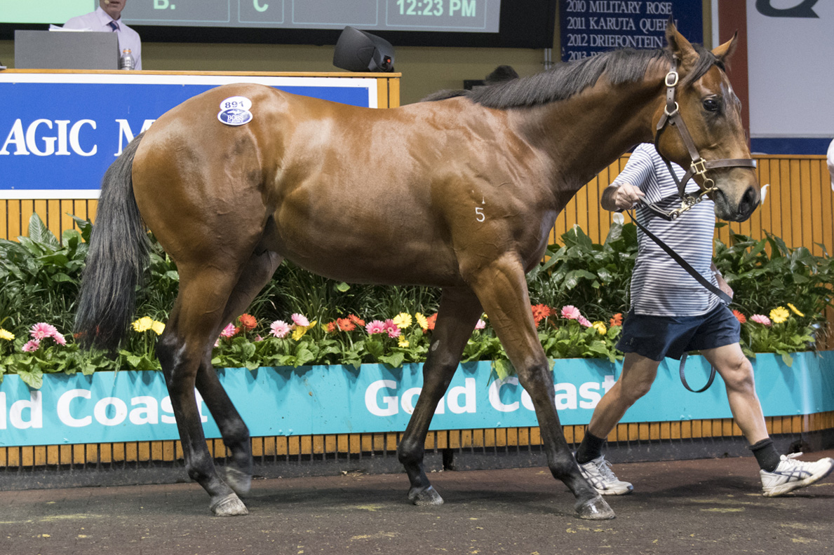 Invincible Colt Tops Day Five on Gold Coast