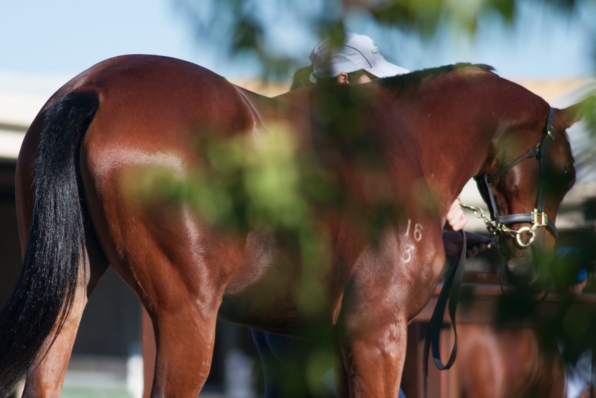 National Yearling Catalogue Now Online