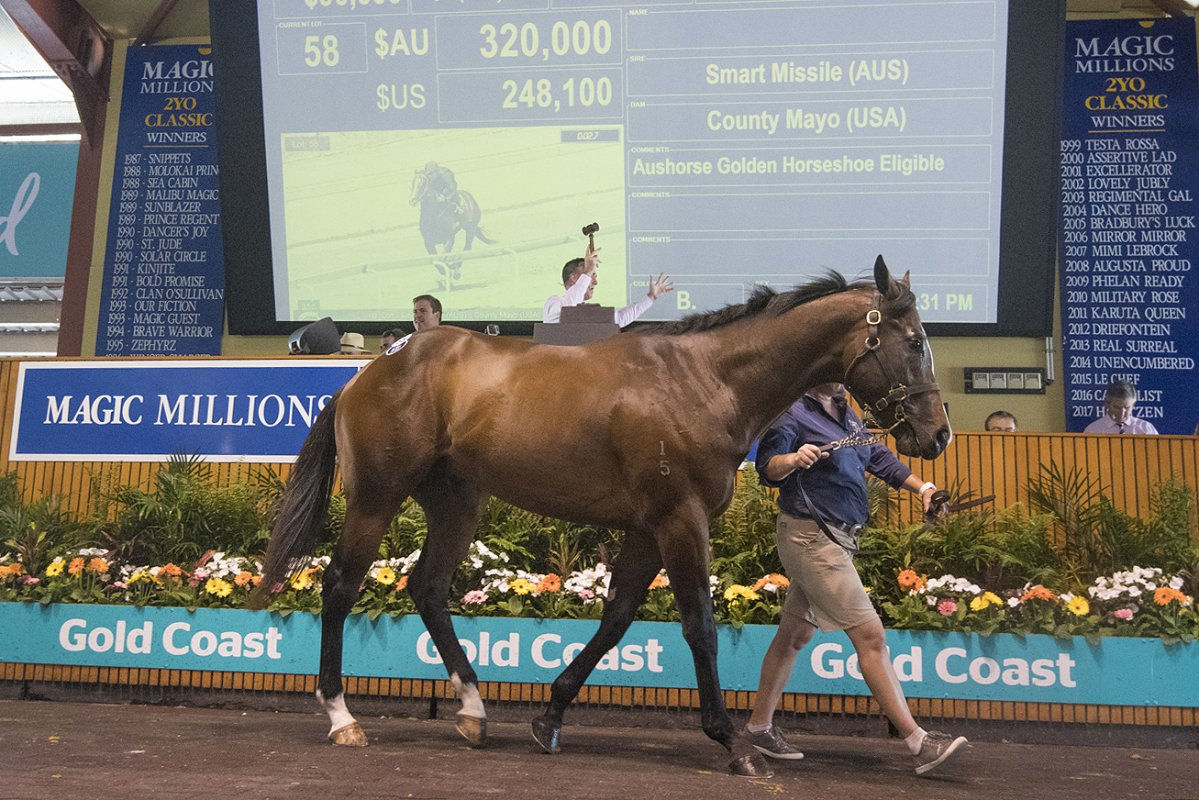 Smart Missile Colt Tops Day One of 2YO Sale