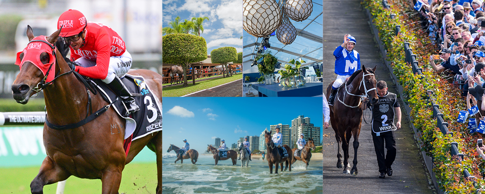 Breeders Take Gold Coast Sale to Next Level