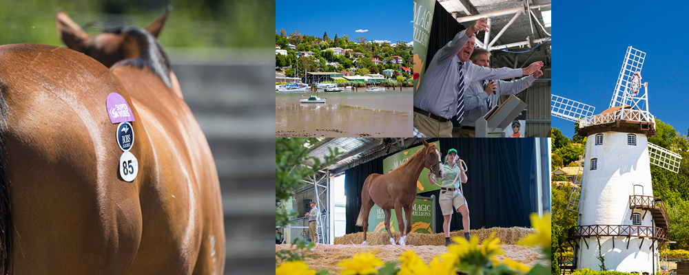 Tasmanian Yearling Catalogue Now Online