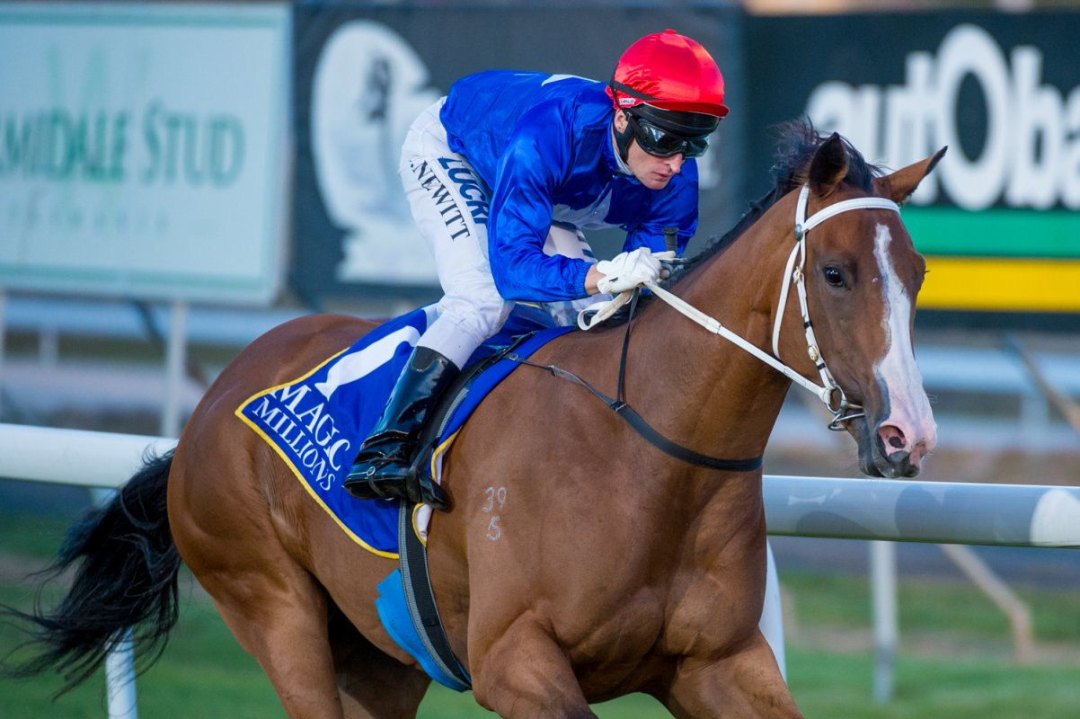 Needs Further Sires Magic Millions Tassie Double