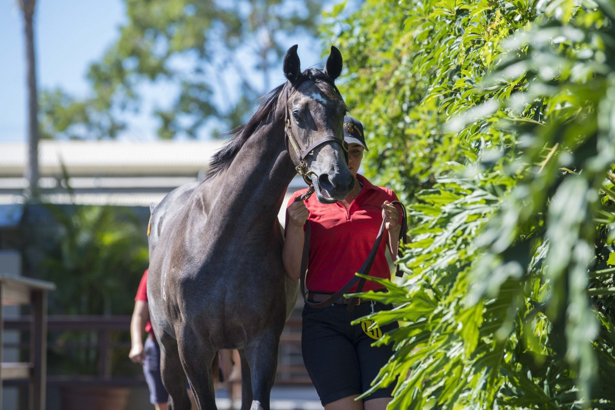 Booming Start to Gold Coast March Yearling Sale