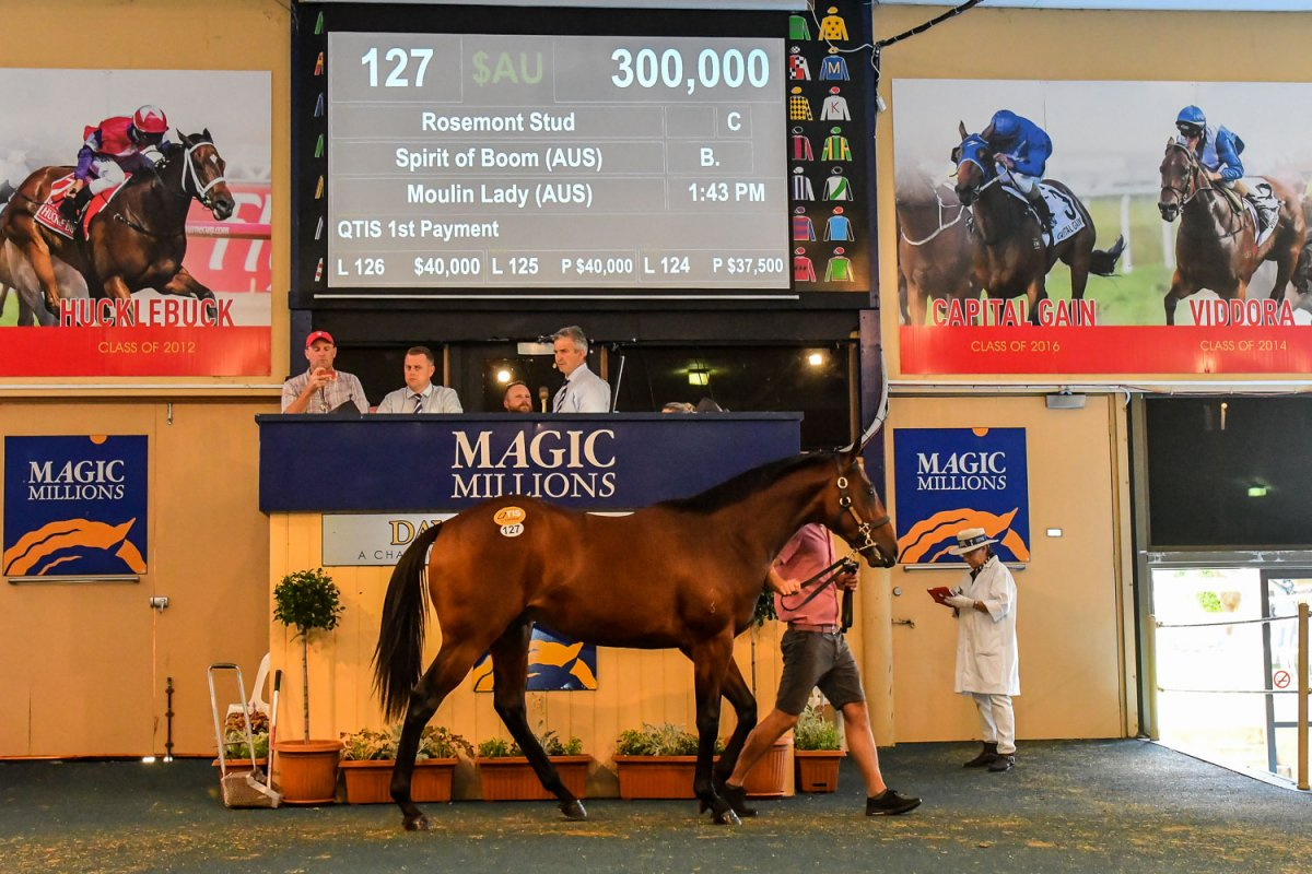 2018 Adelaide Yearling Sale - Magic Millions