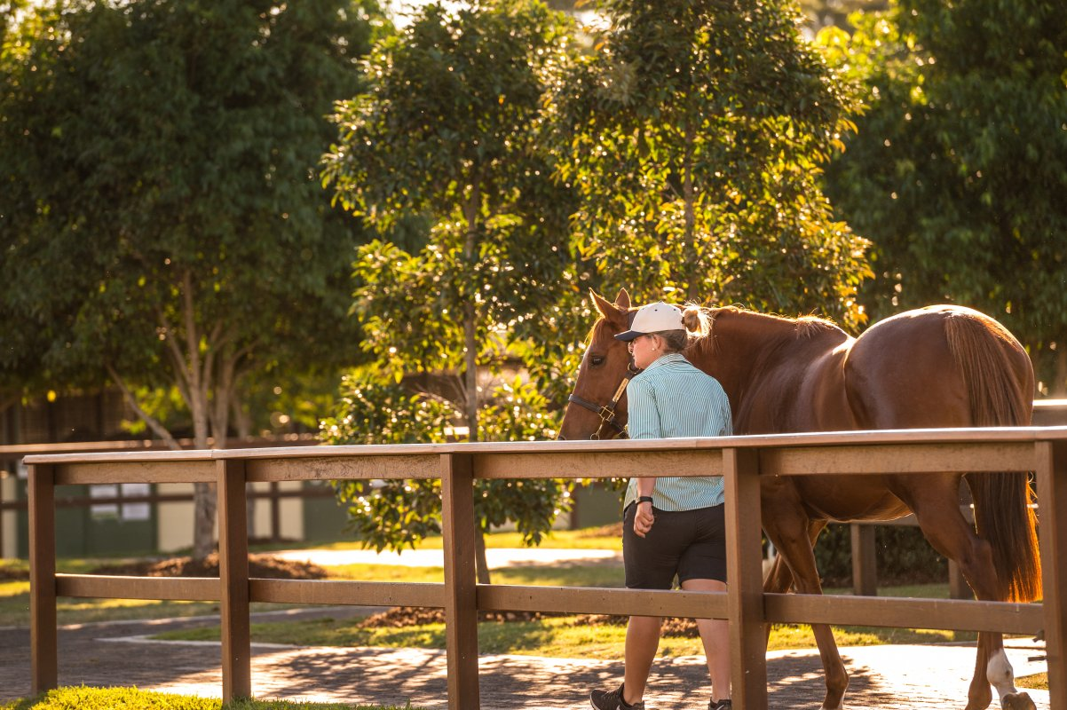 Incredible Quality in National Broodmare Sale