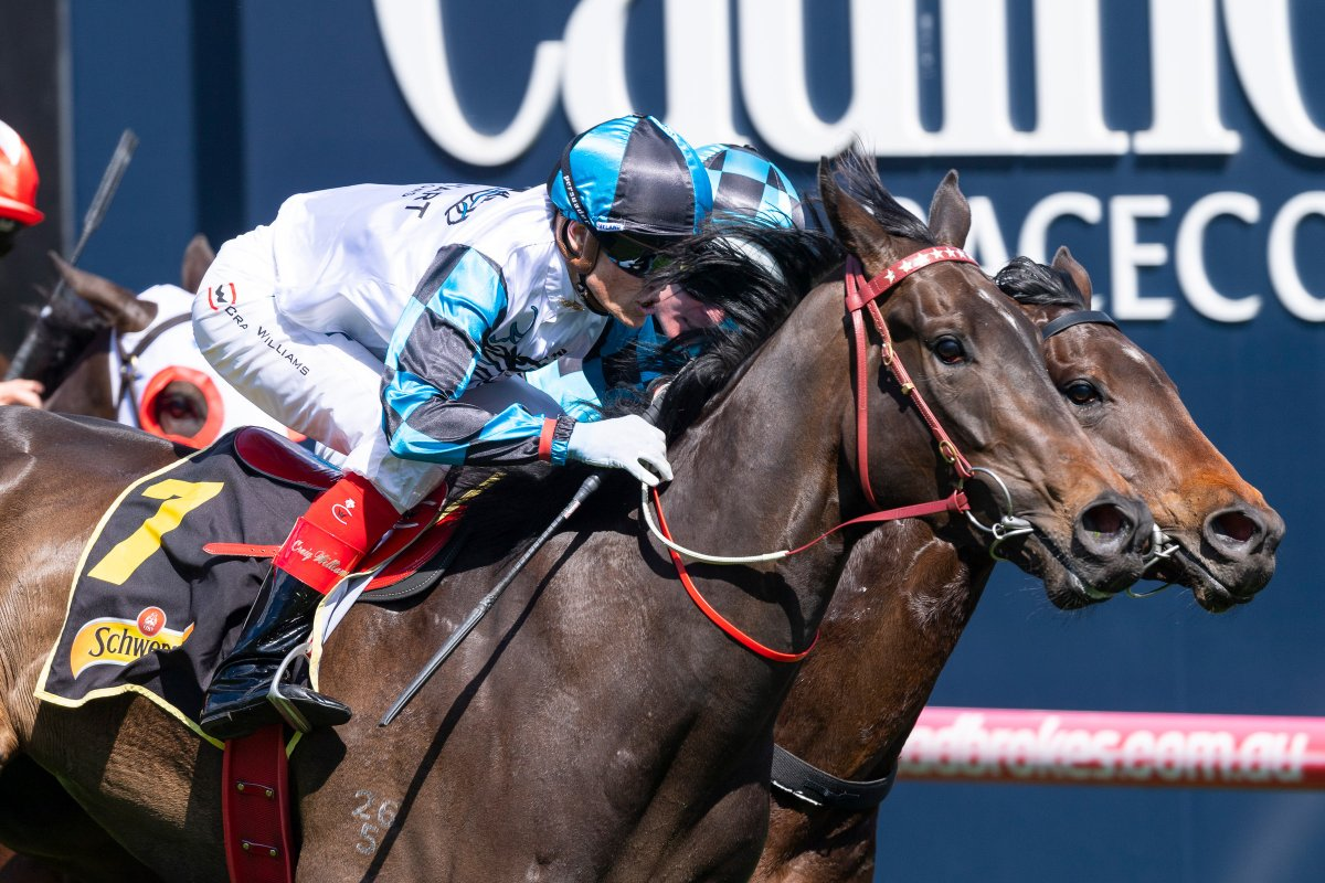 Untapped Amphitrite Stars in Thousand Guineas