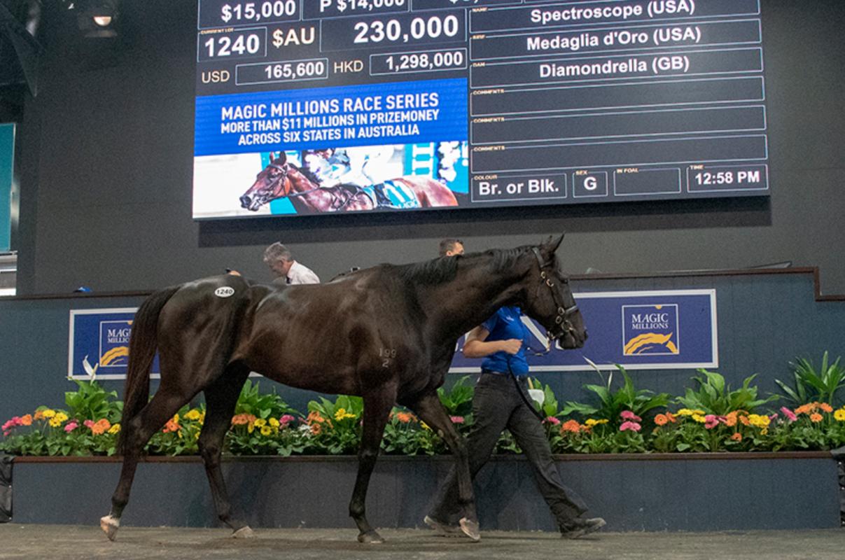 Magic Millions 2019 Hits Record Mark on Gold Coast