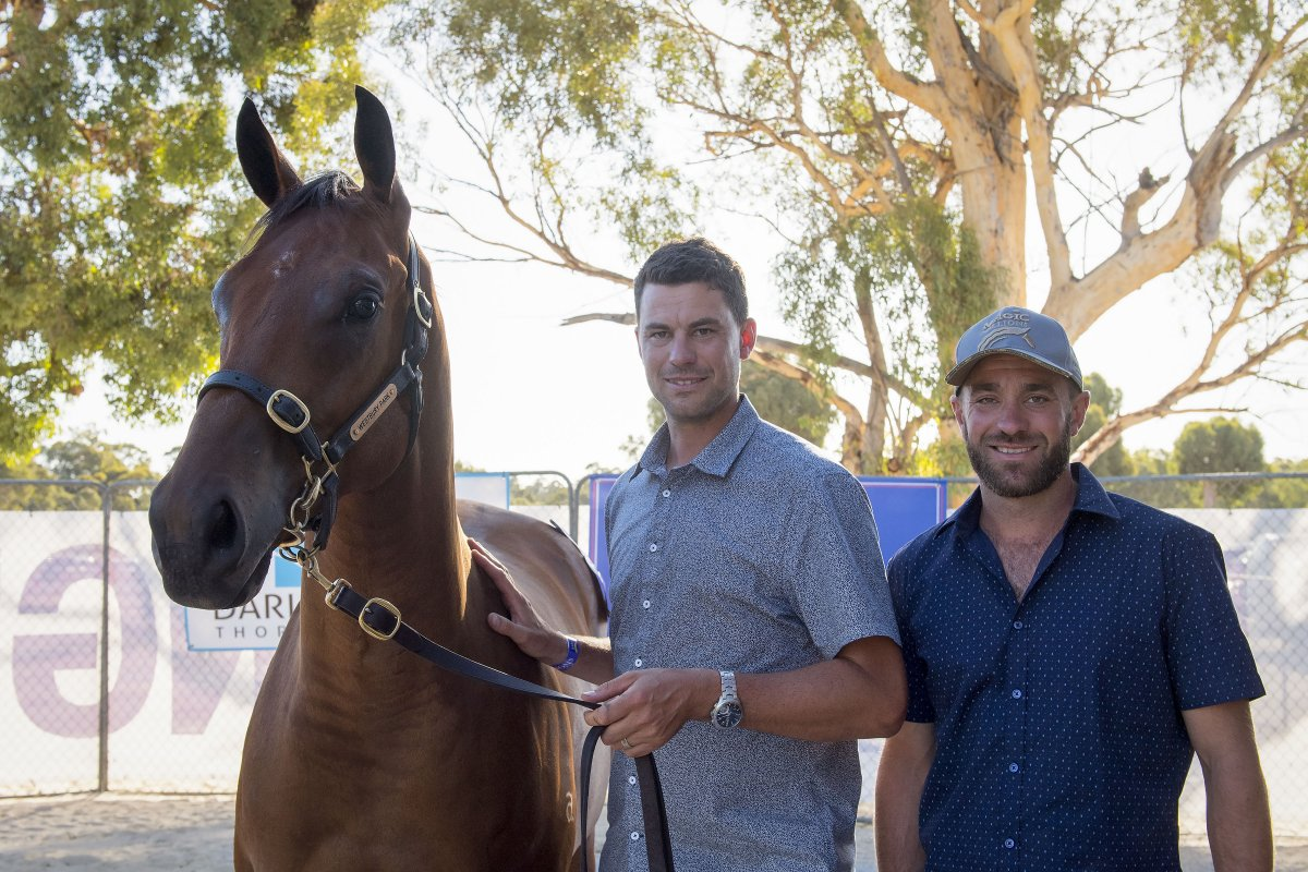 Invincible Colt Tops Book One of Perth Yearling Sale