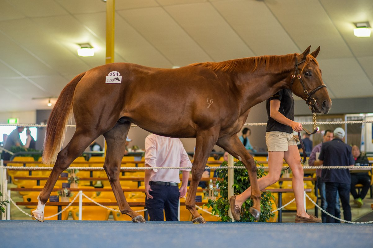 Moore Strikes With Akeed Mofeed Colt in Adelaide
