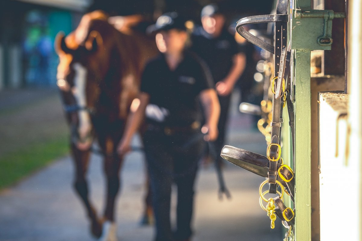 World Class Highlights for National Broodmare Sale