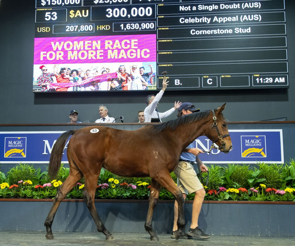 Solid Trade on Day One of National Weanling Sale