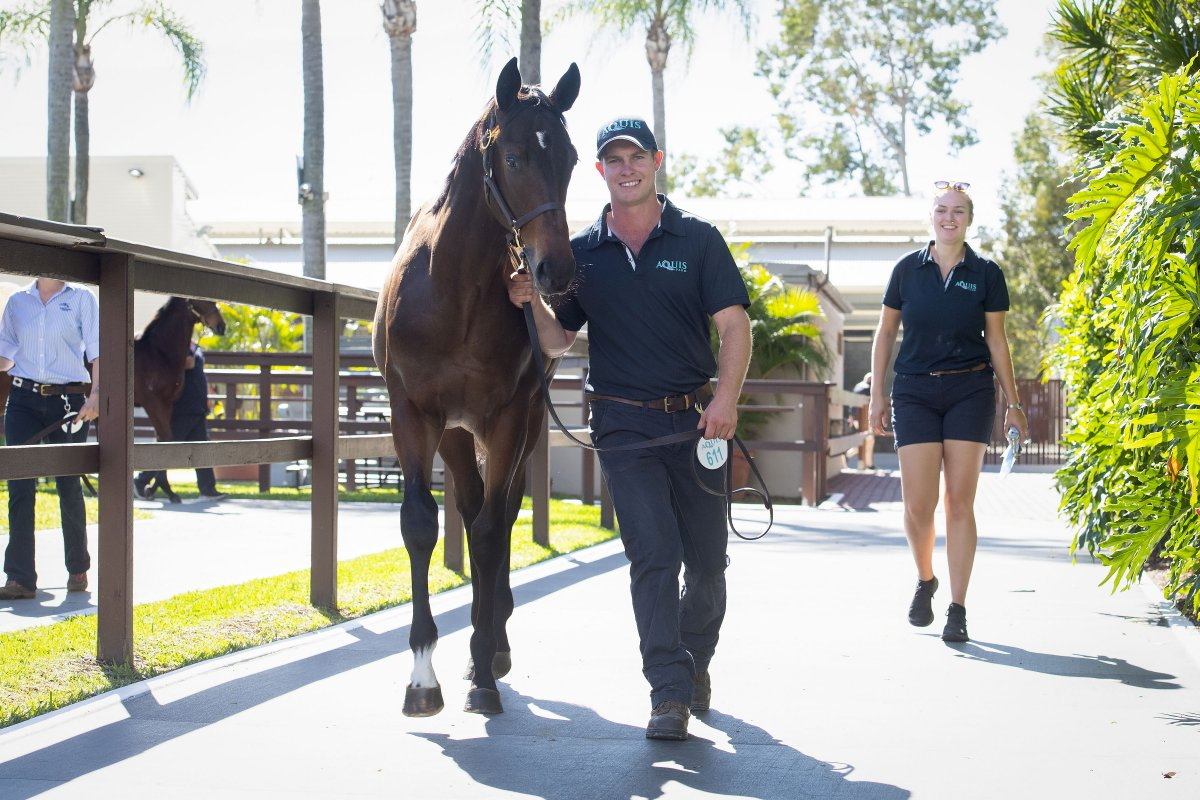 Redoute's Choice Colt Tops National Weanling Sale