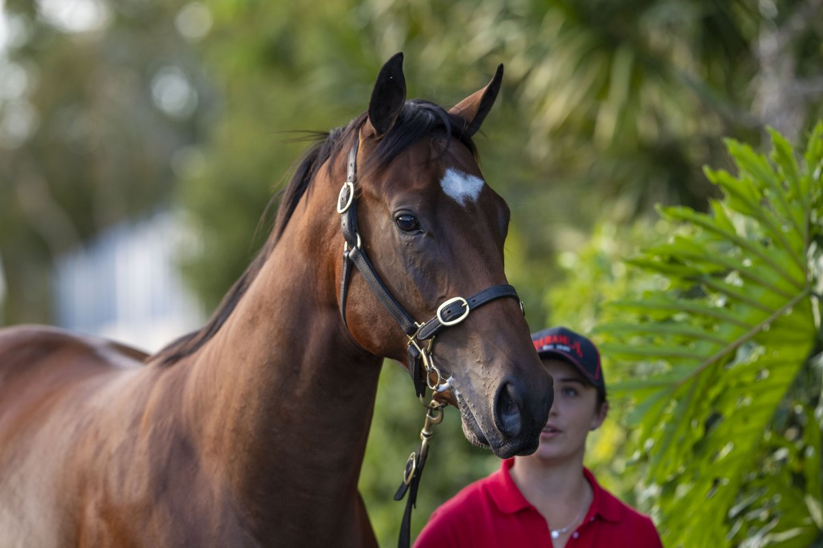 Snitzel Colt Tops Day One of National Yearling Sale