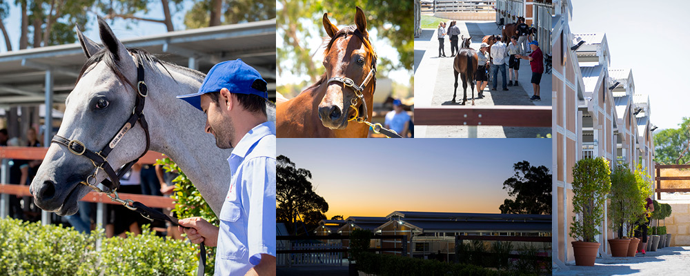 Quality Supplementary and Racehorses Online for Perth Sale