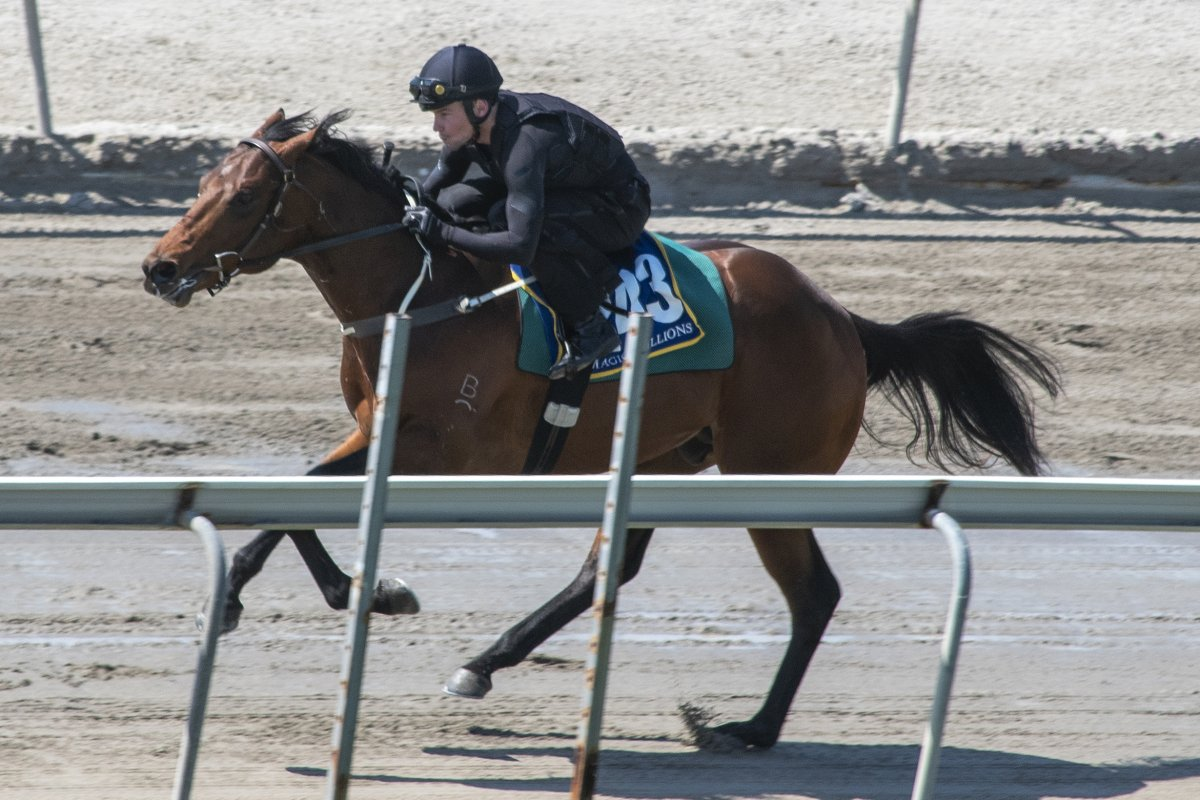 Two-Year-Olds Shine at Gold Coast Breeze-Ups