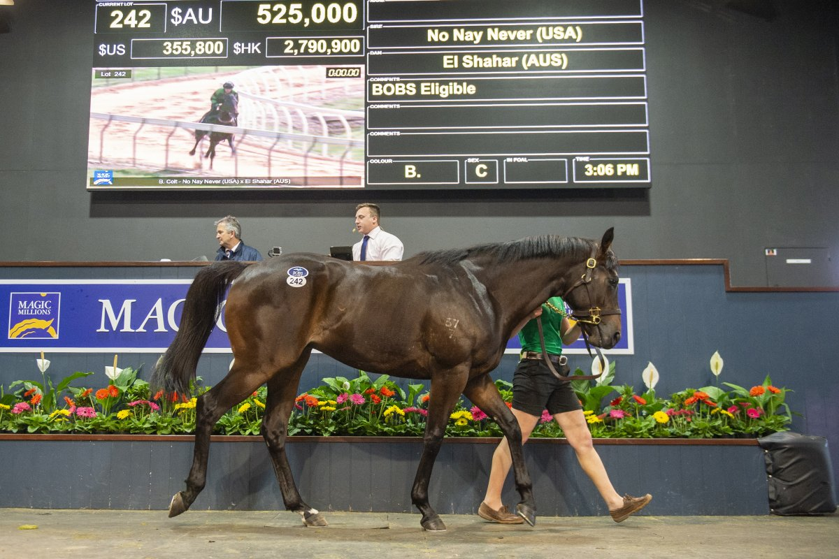 No Nay Never Colt Tops Successful 2YO Sale