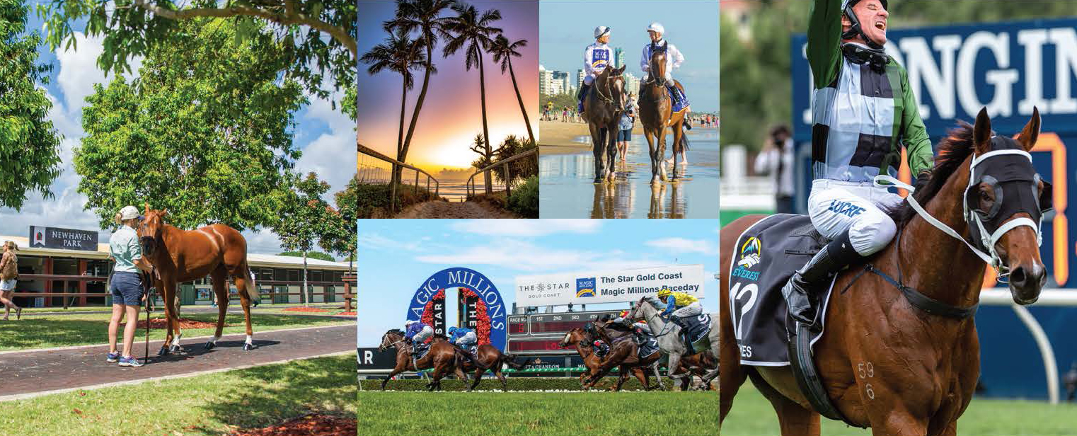 Spectacular 2020 Gold Coast Yearling Catalogue Online