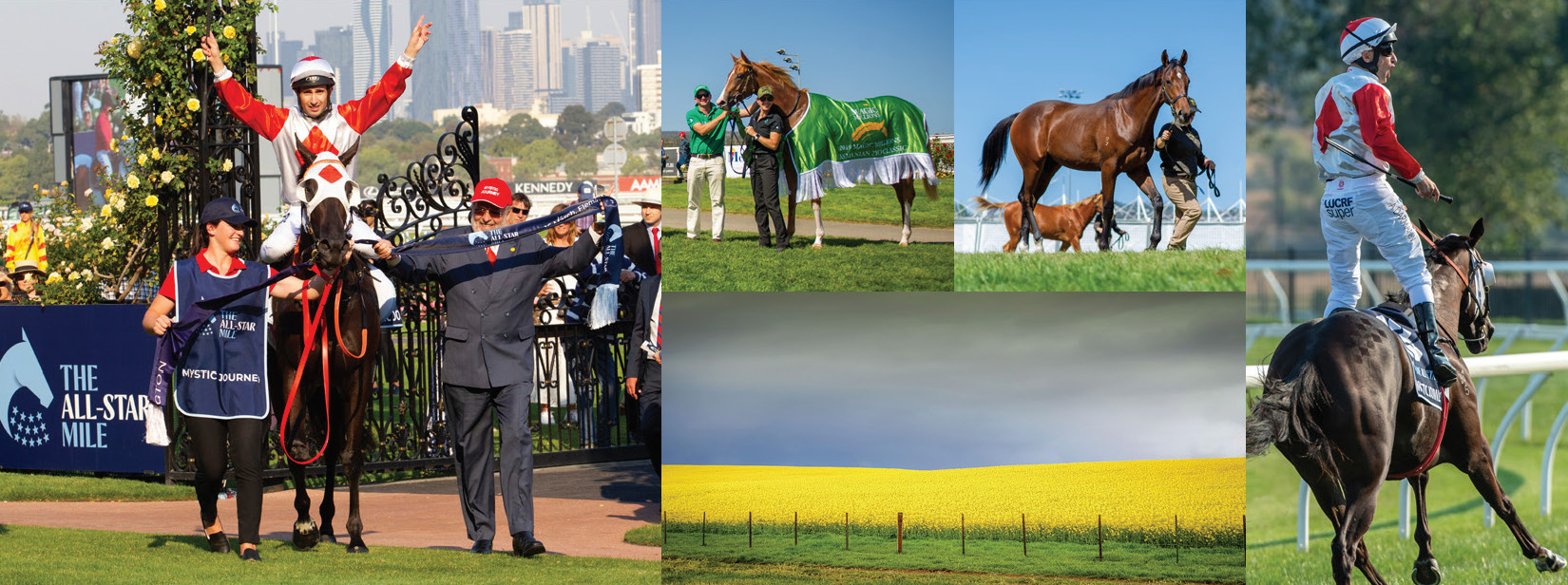 Tasmanian Yearling Sale Catalogue Now Online