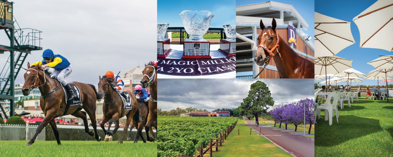 Stars to Converge on Swan Valley for Perth Yearling Sale