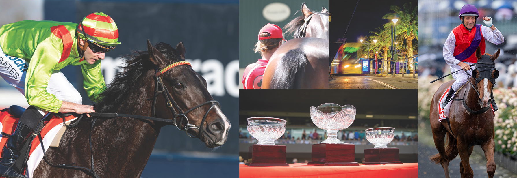 Opportunity Knocks at Adelaide Yearling Sale