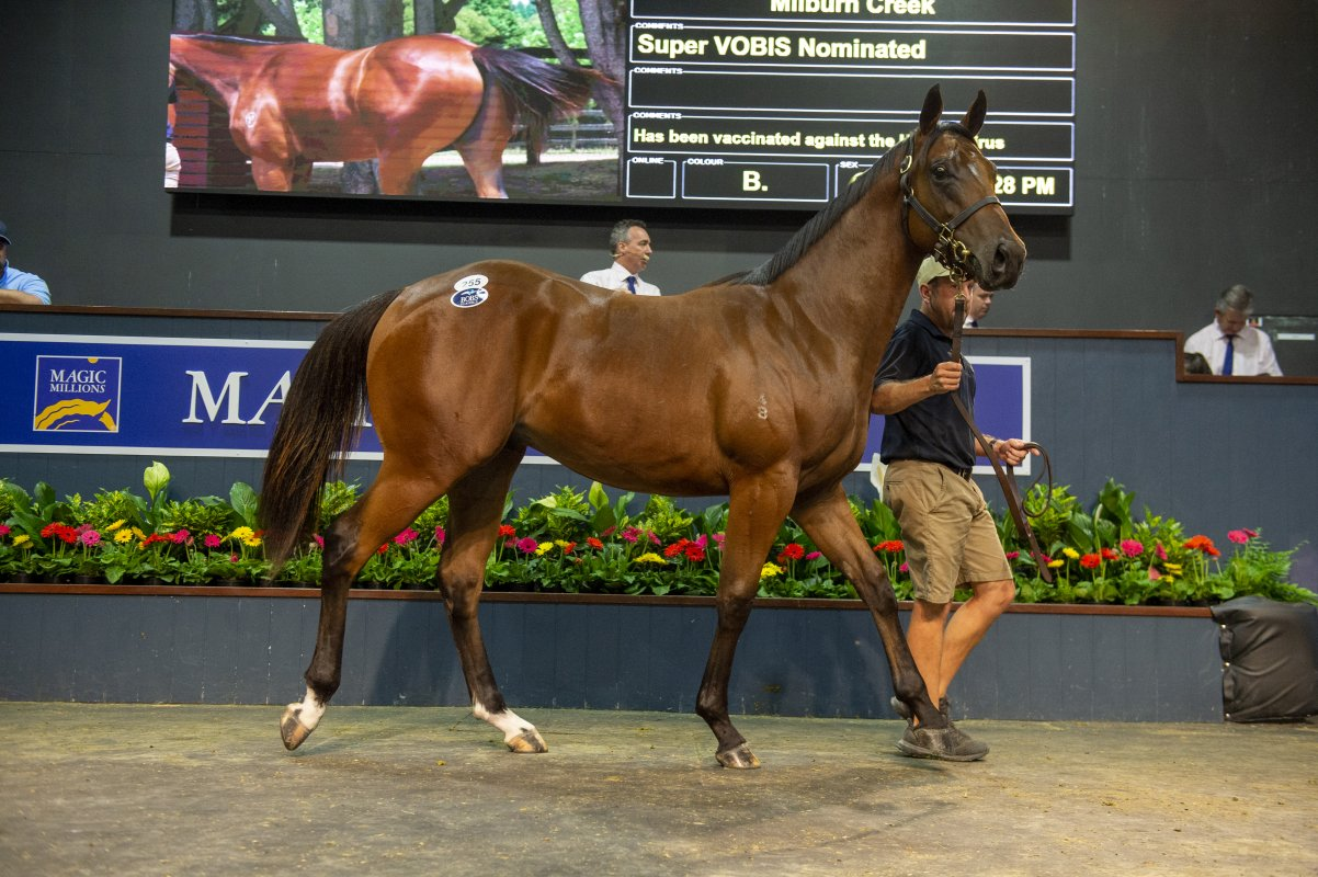 Exceed Colt Excels on Day One on Gold Coast