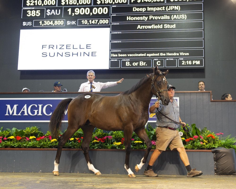 Deep Impact Colt Tops Day Two on Gold Coast