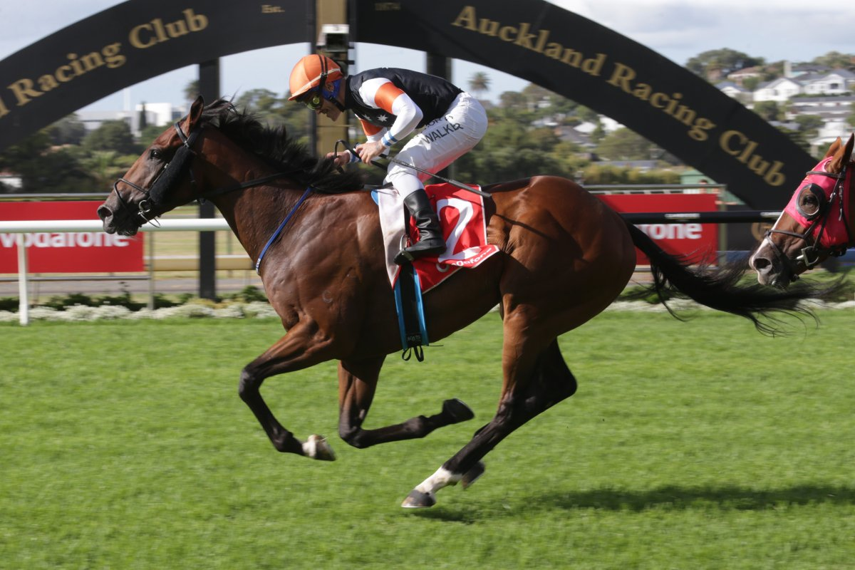 Sherwood Forest Proves Too Tough in NZ Derby
