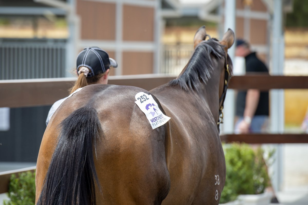 Perth Winter Thoroughbred Sale Catalogue Online