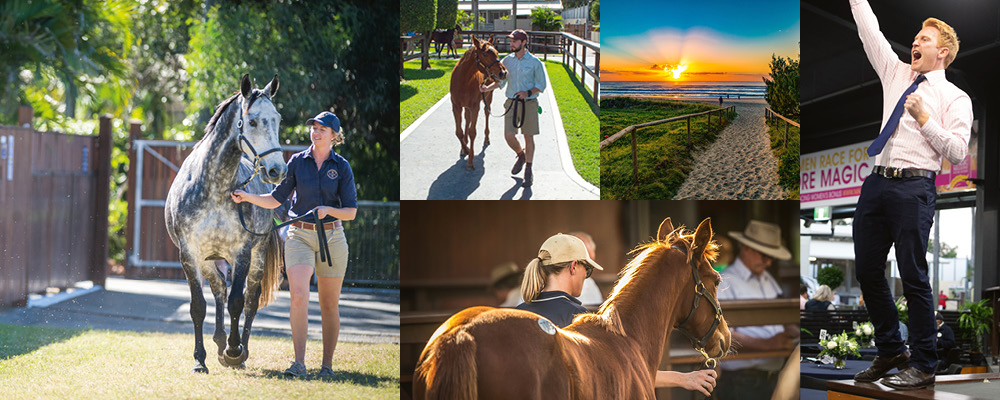 Star Studded National Broodmare and Weanling Catalogues Online