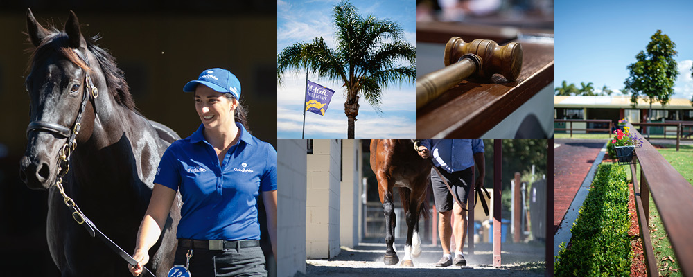 Godolphin and Cojuangco Lots Highlight Racehorse Sale
