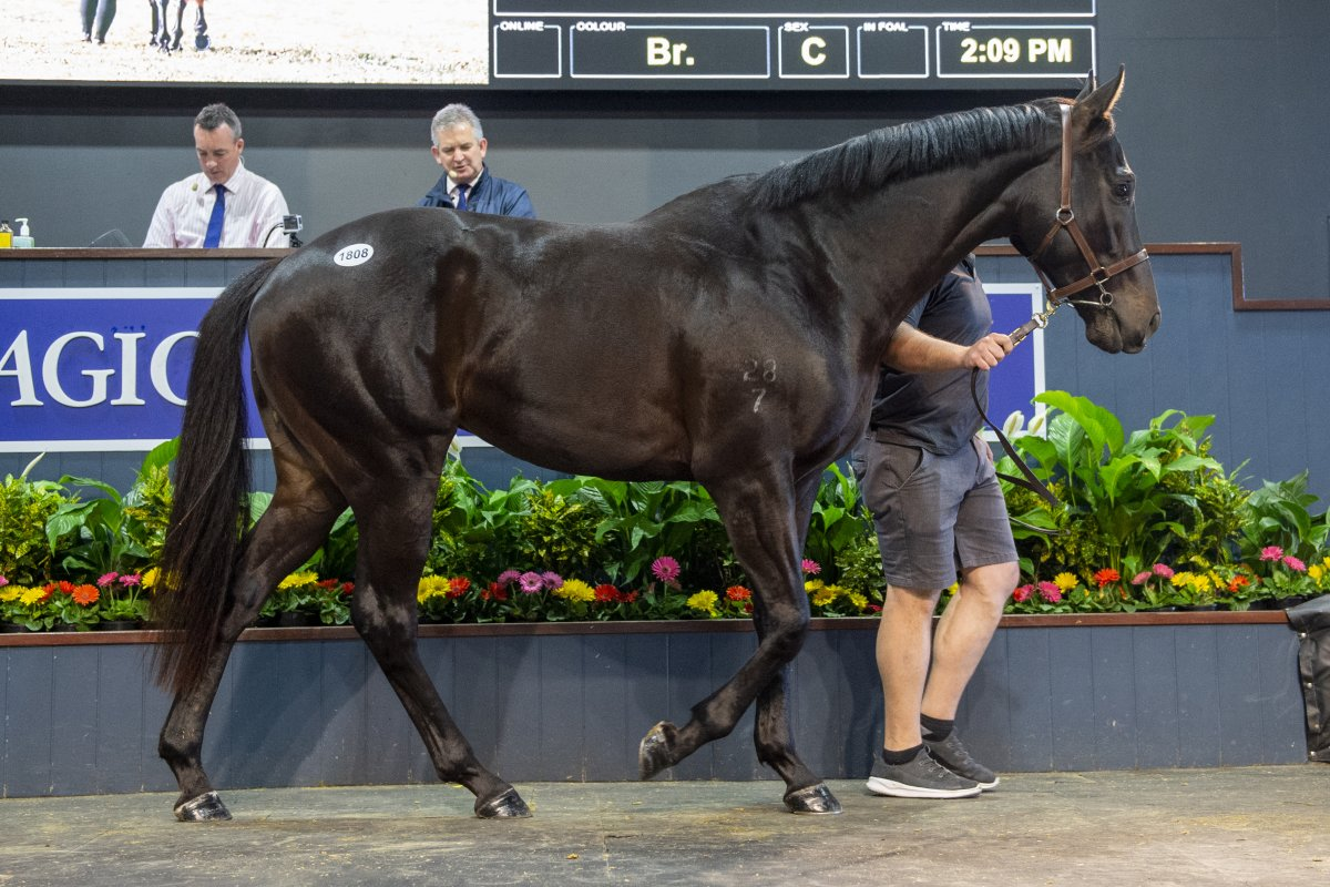 Noble Privilege Tops Final Day of Remarkable National Sale