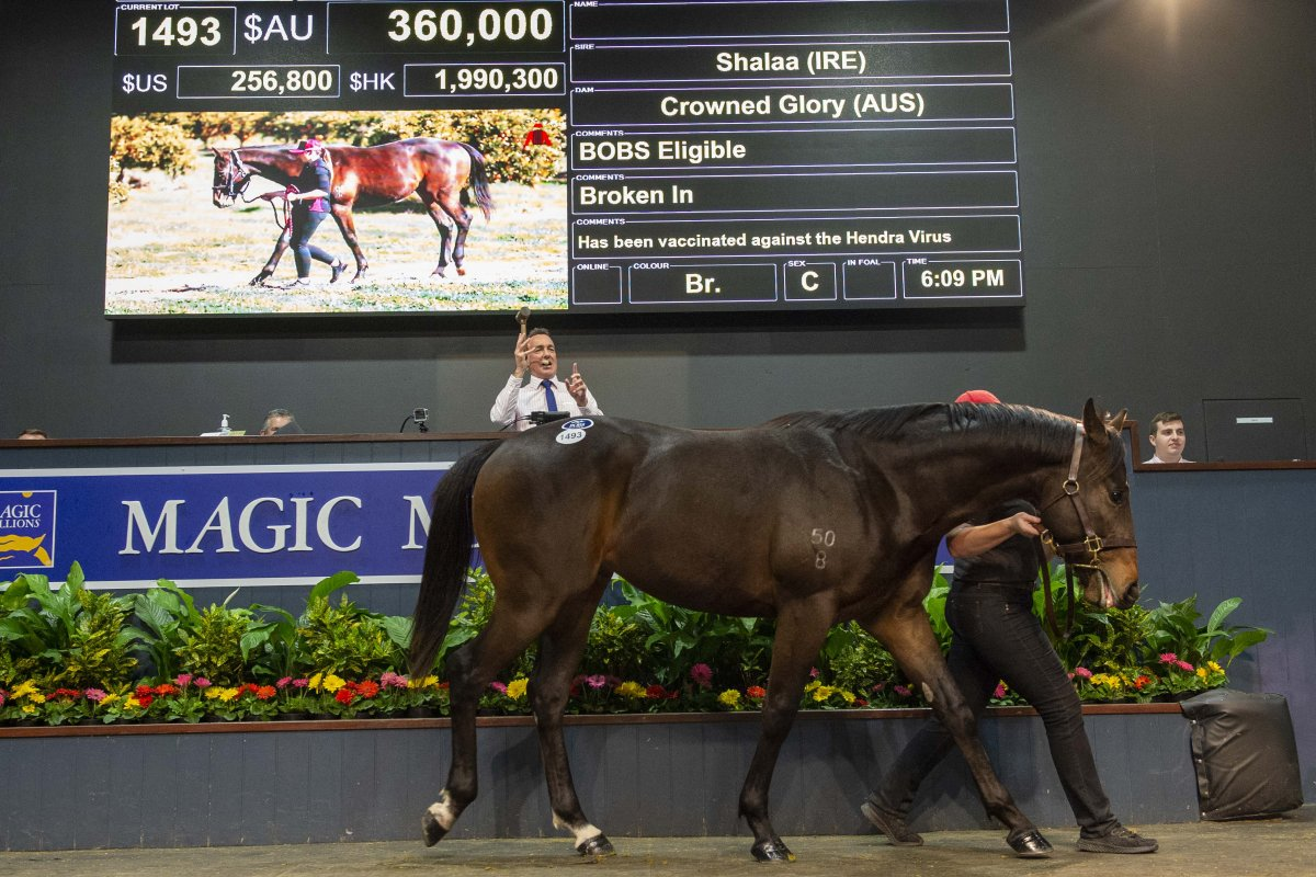 Well Bred Shalaa Colt Tops Yearlings on Gold Coast