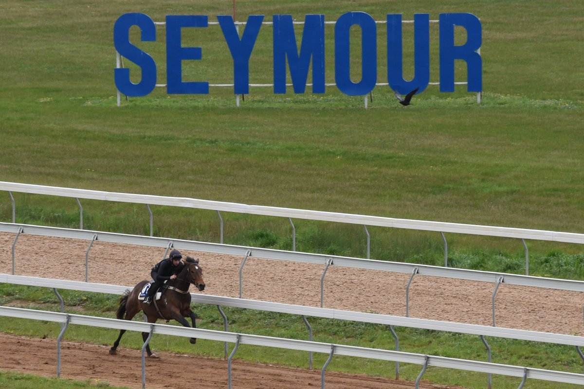 Cable Bay Colt Breezes Quickest at Seymour